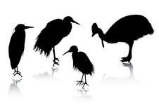 силуэты птицы Стоковое Изображение RF