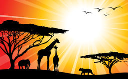 силуэты сафари Африки Стоковые Фотографии RF