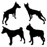 Силуэты собак черные Стоковое фото RF