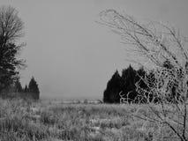 Силуэты тумана в январе стоковое фото