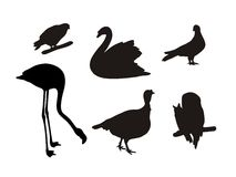 силуэты установленные птицами Стоковое фото RF