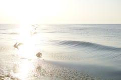 Силуэты чайок летания на солнце излучают на восходе солнца Стоковые Изображения RF