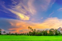 Силуэт абстрактной нежности запачканный и мягкий фокуса захода солнца с зелеными неочищенными рисами field, красивые небо и облак Стоковая Фотография