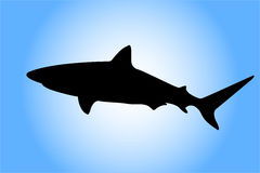 силуэт акулы Стоковая Фотография