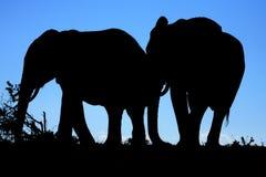 силуэт африканских слонов Стоковое Фото