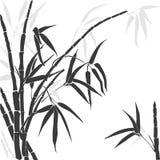 Силуэт бамбука на белой предпосылке Стоковые Фото