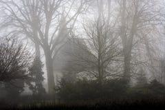 Силуэт белой церков среди высоких деревьев вытекая от тумана Стоковые Фото
