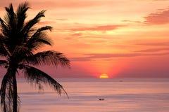 Силуэт вала кокоса на заходе солнца Стоковые Изображения RF