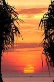 Силуэт вала кокоса на заходе солнца Стоковое Фото