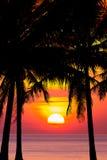 Силуэт вала кокоса на заходе солнца Стоковое Изображение