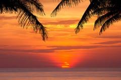 Силуэт вала кокоса на заходе солнца Стоковая Фотография RF