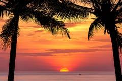 Силуэт вала кокоса на заходе солнца Стоковые Изображения