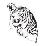 Силуэт вектора тигра стоковые изображения