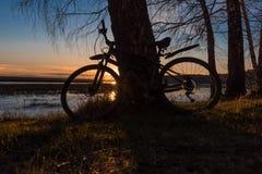 Силуэт велосипеда стоя около дерева против фона заходящего солнца Стоковое Изображение RF