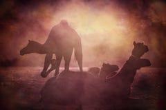 Силуэт верблюда в Pushkar, Mela Стоковое фото RF