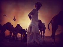 Силуэт верблюда в Pushkar, Mela Стоковые Фото