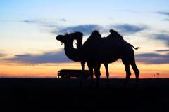 Силуэт верблюда Стоковые Изображения RF