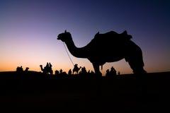 силуэт верблюда Стоковое Изображение RF
