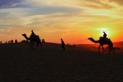Силуэт верблюдов идя в пустыню в заходе солнца стоковые изображения rf
