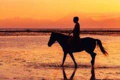 Силуэт верховой лошади персоны на пляже Стоковое Изображение RF