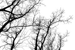 силуэт ветвей Стоковые Фото