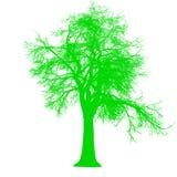 Силуэт взгляда со стороны дерева безлистный изолировал - зеленый цвет - вектор бесплатная иллюстрация