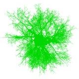 Силуэт взгляд сверху дерева безлистный изолировал - зеленый цвет - вектор иллюстрация вектора