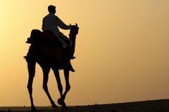 силуэт всадника верблюда Стоковое Изображение