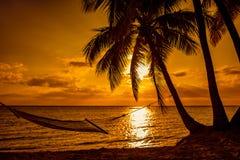 Силуэт гамака и пальм на тропическом пляже на солнцах Стоковое Изображение