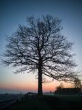 Силуэт дерева в раннем утре кроме дороги сельской местности Стоковая Фотография RF