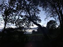 Силуэт дерева захода солнца стоковая фотография rf