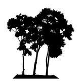 Силуэт дерева изолированный на белом Backgorund Иллюстрация Vecrtor Стоковое Фото