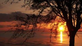 Силуэт дерева и красивый заход солнца на море видеоматериал
