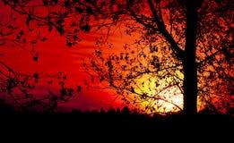 Силуэт дерева на заходе солнца Стоковая Фотография RF