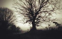 Силуэт дерева на ноче хеллоуина Стоковое Изображение