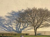 Силуэт дерева на предпосылке стены с солнцем утра, ветвями и тенью, зеленой травой Изображение стоковые фотографии rf