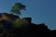 Силуэт дерева на холме Стоковое Изображение RF