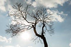 Силуэт дерева против неба с облаками Стоковая Фотография RF