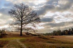Силуэт дерева с обнаженными ветвями на наклоне небольшого холма стоковая фотография