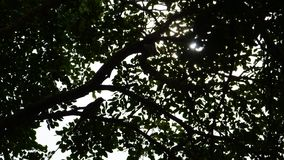 Силуэт дерева с птицей и солнечным светом стоковая фотография