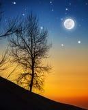 Силуэт дерева Стоковое Фото