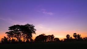Силуэт деревьев на голубом небе на комплекте солнца Стоковая Фотография RF