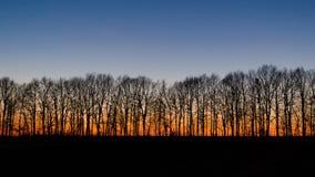Силуэт деревьев на заходе солнца стоковое изображение