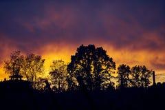 Силуэт деревьев против изумляя неба захода солнца стоковые изображения rf