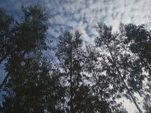 Силуэт деревьев с эффектным голубым небом стоковые фотографии rf