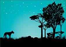 Силуэт динго и кенгуру с голубым небом и звездами стоковое фото rf
