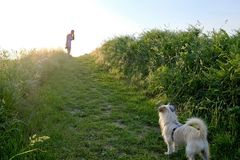 Силуэт женщины при собака идя вверх по пути гравия на заходе солнца Стоковая Фотография