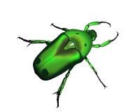 силуэт жука Стоковое Изображение