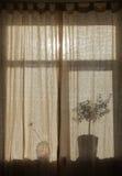 Силуэт завода дома Стоковое Изображение RF