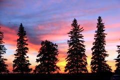 Силуэт захода солнца, Брэндон, Манитоба Стоковое Изображение RF
